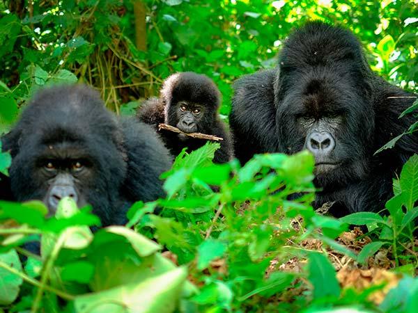 Rejser til Uganda