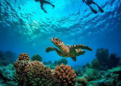 Havskildpadder i Seychellerne