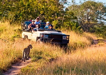 Safari Game Drive i Sydafrika