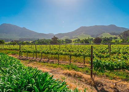 Winelands, vinmarker i Sydafrika