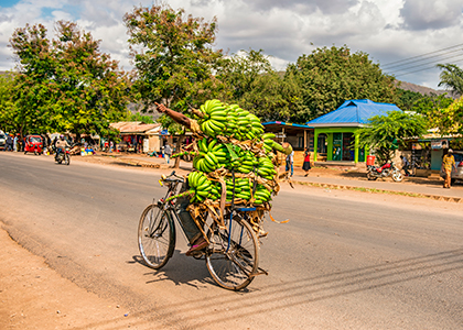 Afrikaner transportere bananer på cykel i Arusha