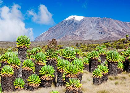 Uhuru Peak på toppen af mount Kilimanjaro