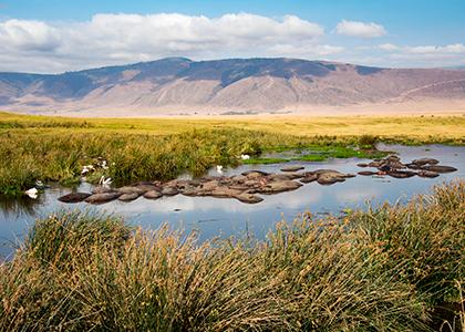 Flodheste i Ngorongoro Conservation Area