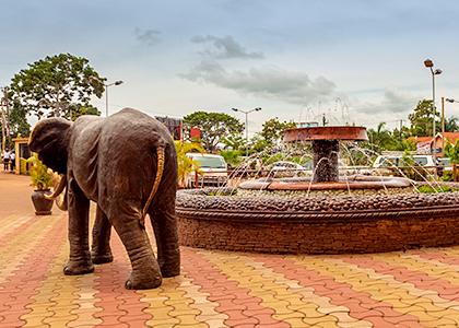 Elefant i byen Entebbe i Uganda